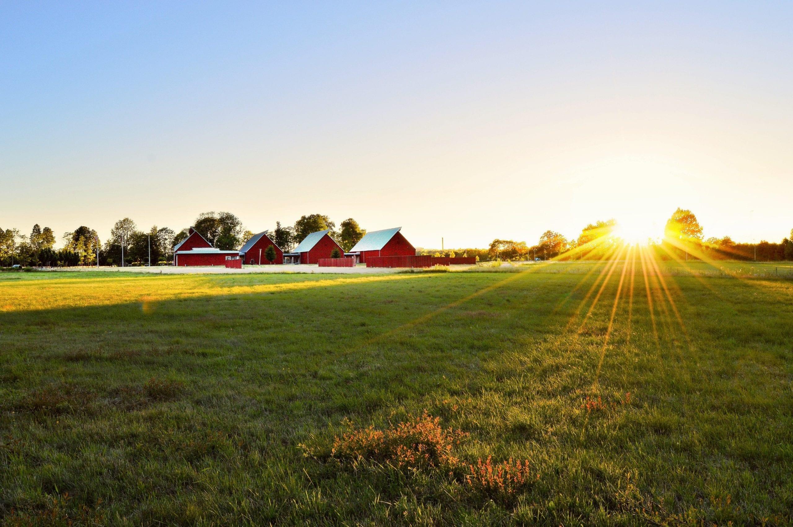 green-grass-field-near-house